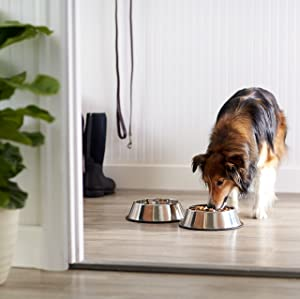 New Puppy Checklist: AmazonBasics Stainless Steel Dog Bowl