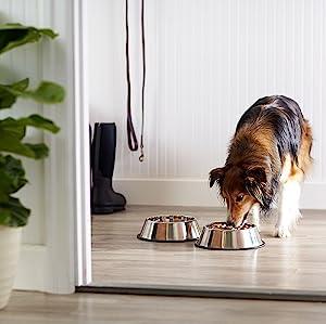 New Puppy Checklist: AmazonBasics Stainless Steel Dog Bowl
