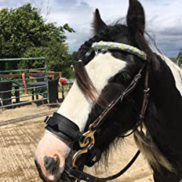 HACKAMORE BITLESS HORSE BIT BRASS GOLDEN GERMAN SILVER PADDED LEATHER BNWT