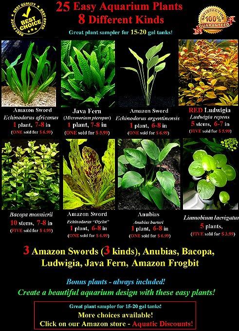 Amazoncom 25 Live Aquarium Plants 8 Different Kinds 3 Amazon