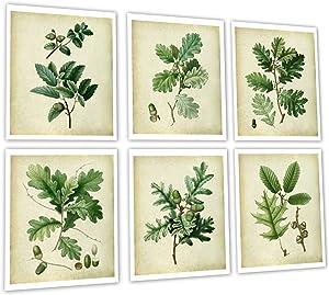 Vintage Oak Leaves Set of 6 Unframed Art Prints, Farmhouse Decor Wall Art