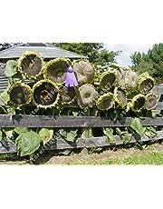 20 pcs sunflower seeds giant sunflower rare flower seeds for home garden planting sunflower seed birds