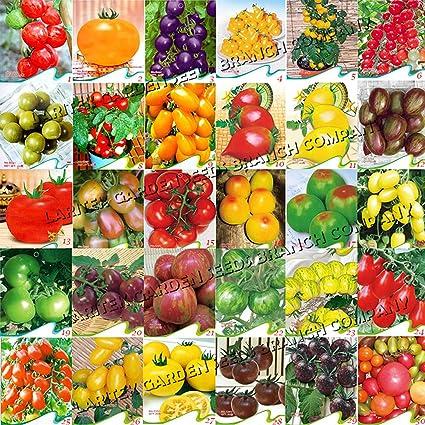 Amazon.com: Mejor Jardín semillas raras 30 diferentes tipos ...