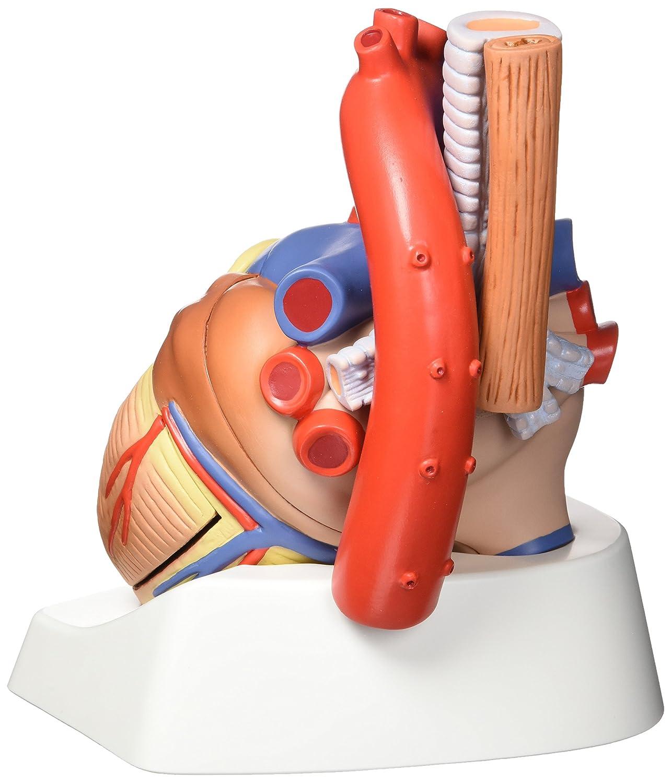 Nett Menschliche Anatomie Witze Fotos - Menschliche Anatomie Bilder ...