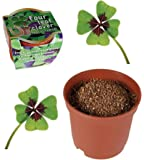 Grow Your Own Lucky Four leaf clover - A Gardeners Novelty Gift - Mans / Mens Perfect Ideal Christmas Present / Gift / Stocking Filler Ideal Gift for The Gardener