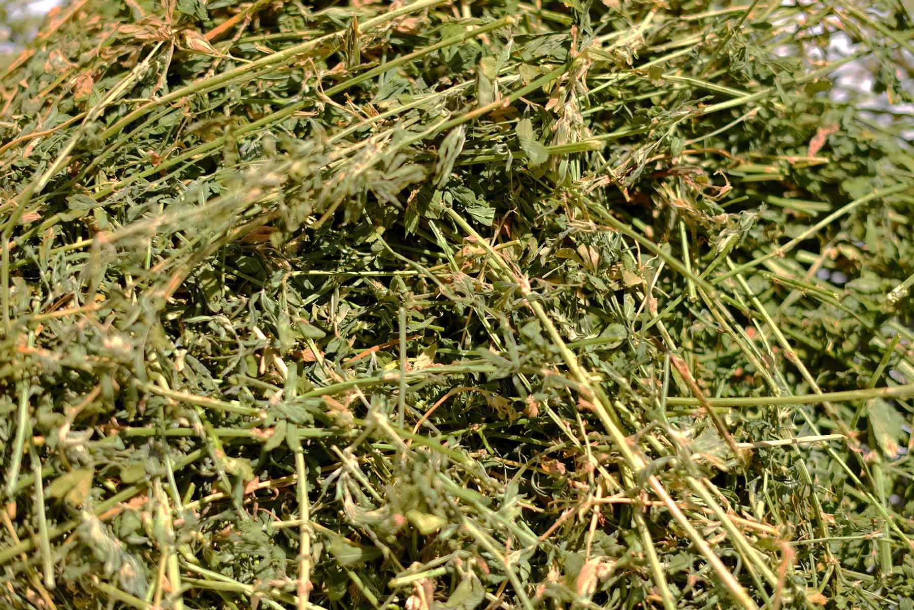 Thunder Acres Premium Alfalfa Hay (5 lbs.) by Thunder Acres