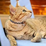 Golden Panda Reflective Cat Collar with Bell, Set