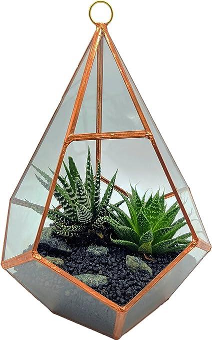 Cultivea Terrario in vetro - Decorazione Design e moderno per ...