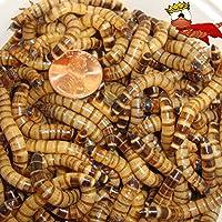 300 unidades de gusanos vivos, reptiles, pájaros, mejor anzuelo de pesca (envío gratuito)