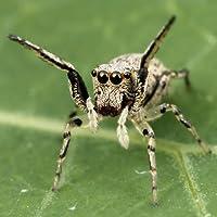 Spinne Arten Trivia Quiz
