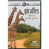 NATURE: Giraffes: Africa's Gentle Giants DVD