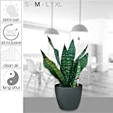 HappyGrün: The ultimate Houseplant - All inclusive soil free hydrophonic indoor plant system with plant & self-watering planter | Foolproof & easy to use | Snake Plant | Sylt 17/15 | Grey - High Gloss