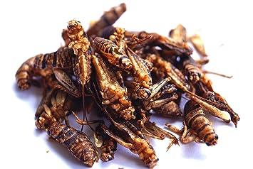 Edible crickets for sale