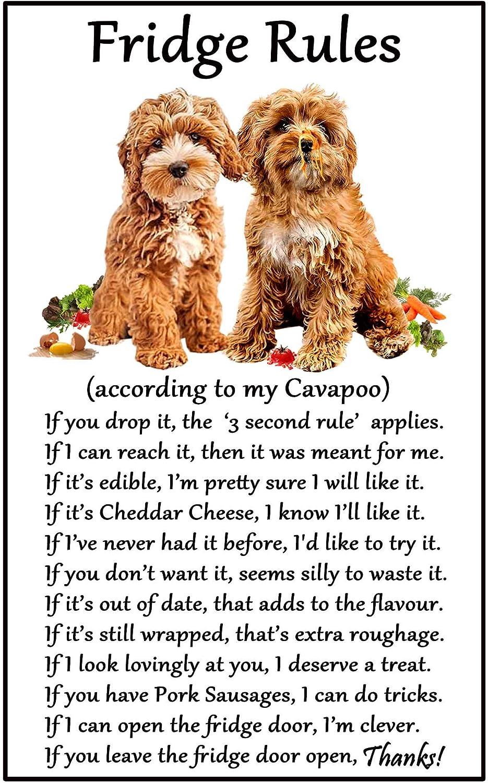 Dog Magnet Cavapoo by Paper Island Fridge Magnet