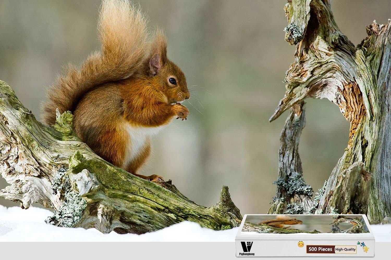 100%正規品 pigbangbang、20.6 X – 15.1インチ B07CV83Z3S、difficultパズル接着のJigsawプレミアム木製 – Lovely Squirrel – Squirrel 500ピースジグソーパズル B07CV83Z3S, 建材百貨店:3cdceaa5 --- fenixevent.ee