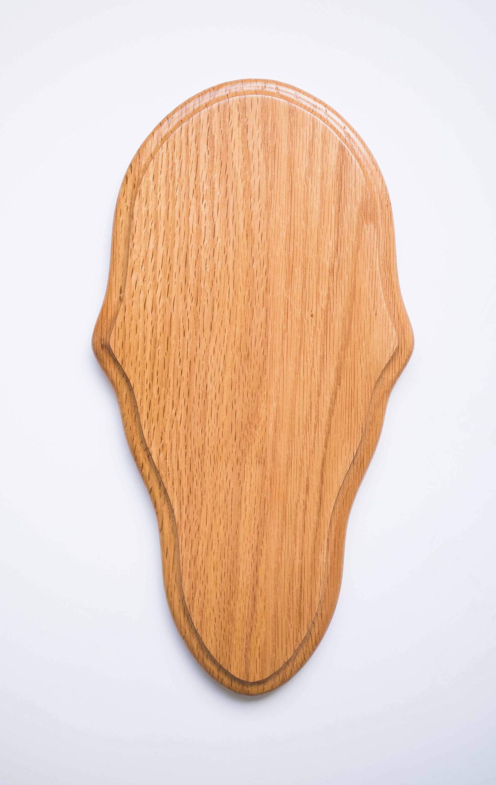 Taxidermists Woodshop Medium Oak Classic Deer European Skull Mount Face Plate Plaque