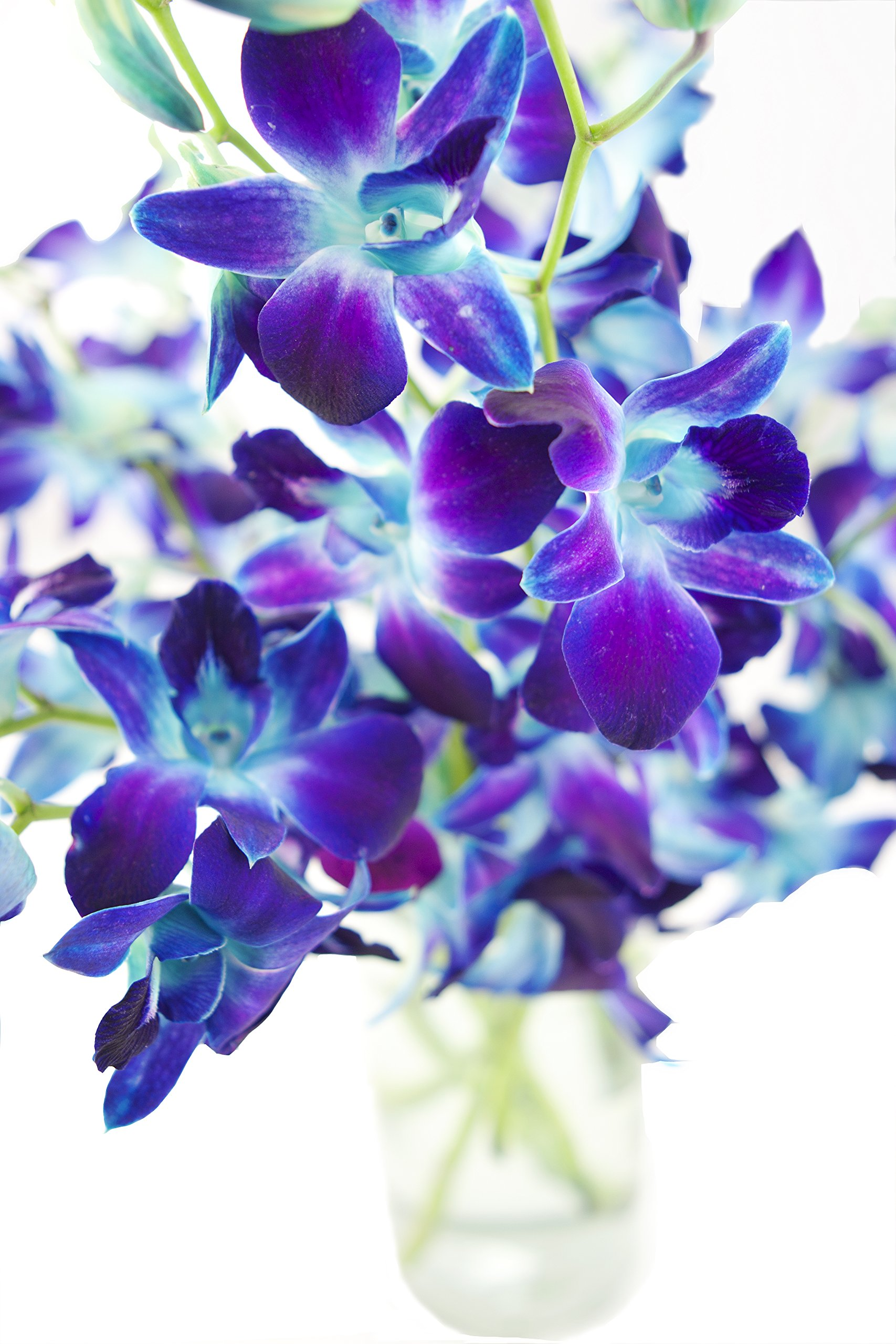 Galleon Kabloom Exotic Blue Sapphire Orchid Bouquet Of