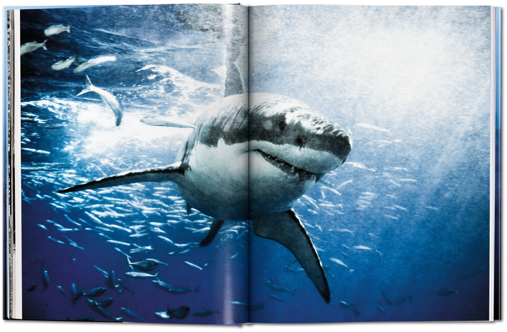 Amazon.com: Michael Muller: Sharks, Face-to-Face with the Ocean\'s ...