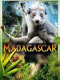 Madagascar 2D Timo Joh Mayer product image