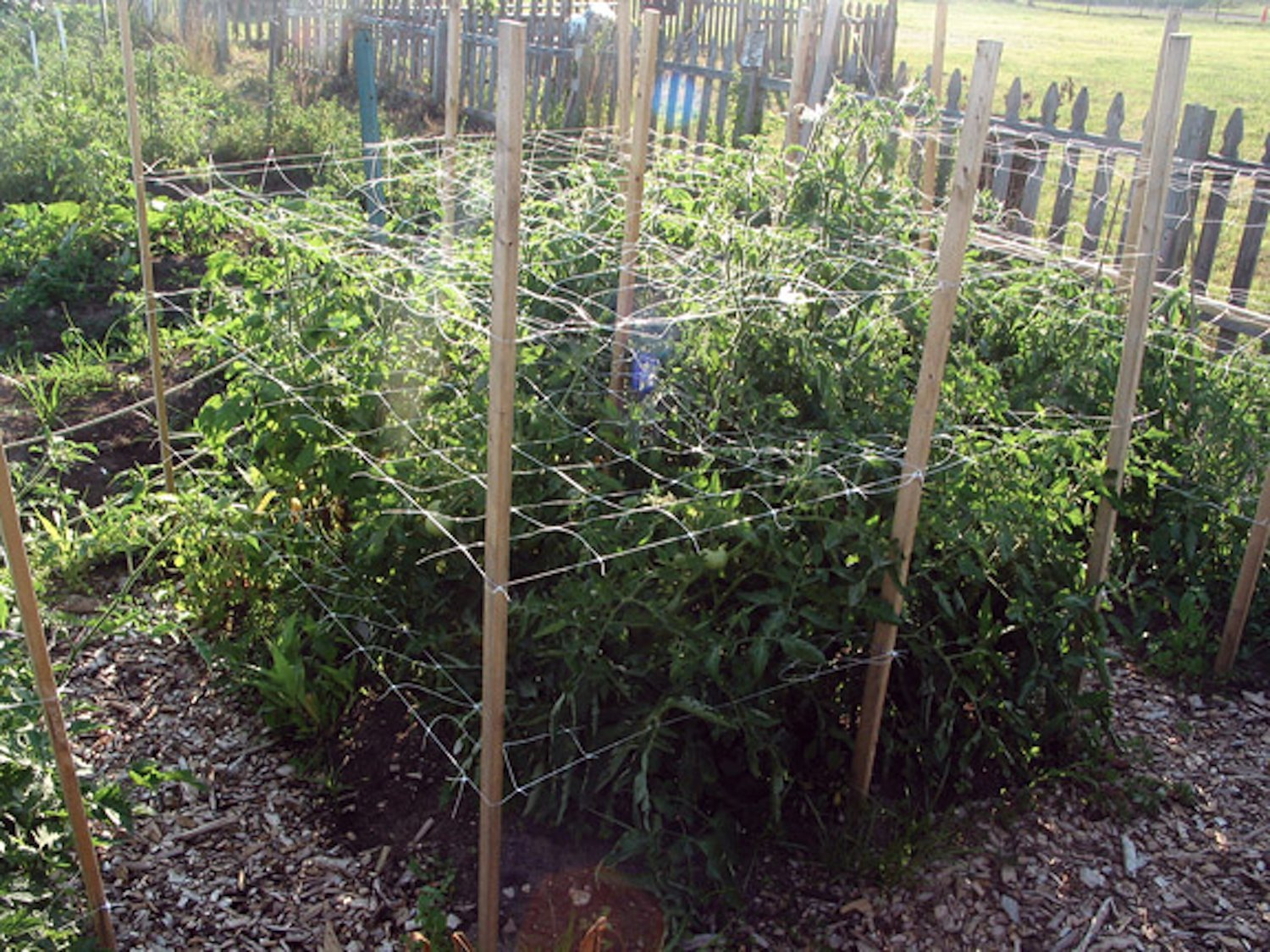 Nice Vine And Veggie Trellis Net Part - 8: Amazon.com : TRELLIS NETTING For SMART GARDENERS: Supports Tomatoes,  Vegetables U0026 Fruit To Grow Upright, Bonus: 5 Creative Ways To Use Garden  Netting Ebook ...