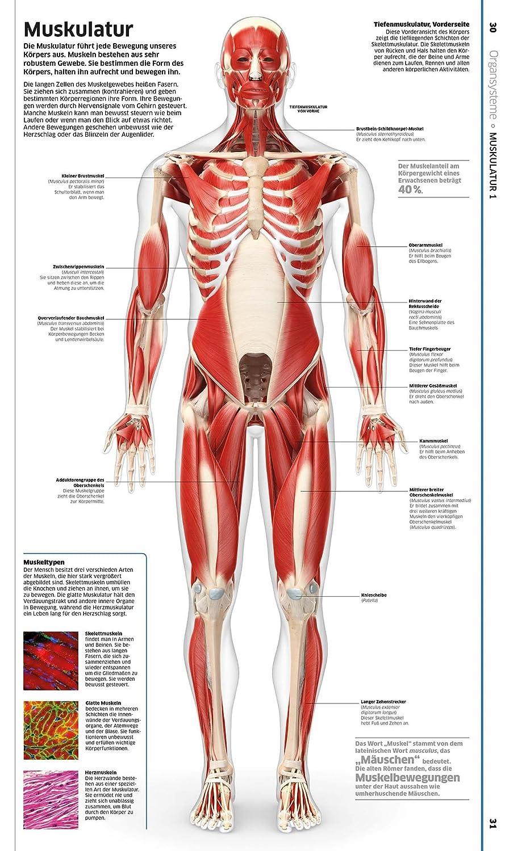 Schön Wo Online Anatomie Und Physiologie Nehmen Fotos - Menschliche ...