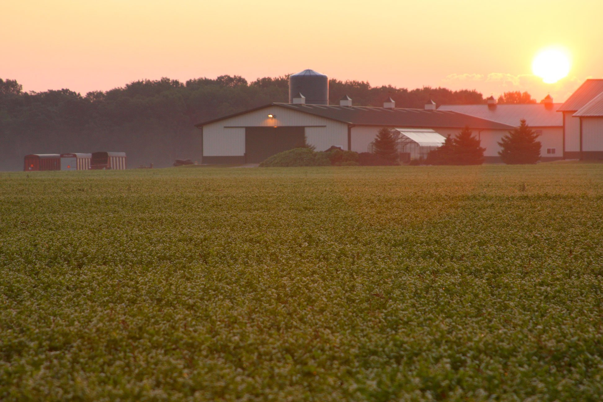 Standard Process - Cellular Vitality - Vitamin B1, B2, B6, Folate, B12, Biotin, CoQ10, Supports Healthy Cellular Processes and Provides Antioxidant Activity, Gluten Free and Vegetarian - 90 Capsules by Standard Process (Image #8)