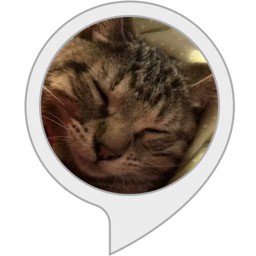 cat-namer