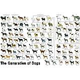 1000ピース ジグソーパズル めざせ!パズルの達人 犬の系統図(50x75cm)