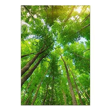 Dekoglas Glasbild Wald Acrylglas Bild Kuche Wandbild Flur Bilder
