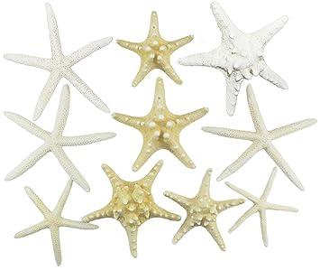 Amazoncom Us Shell Inc Starfish Mix Arts Crafts Sewing