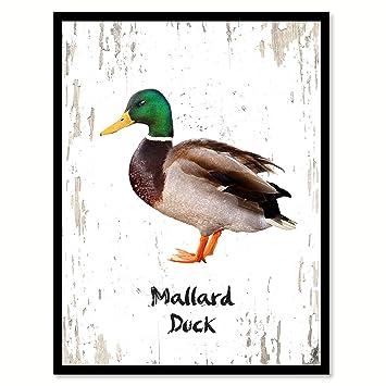 Amazon.com: Mallard Duck Bird Canvas Print, Black Picture Frame Gift ...