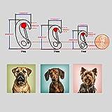 Divoti Dog Tag/Pet ID Tag w/Pet Tag Quick Clip