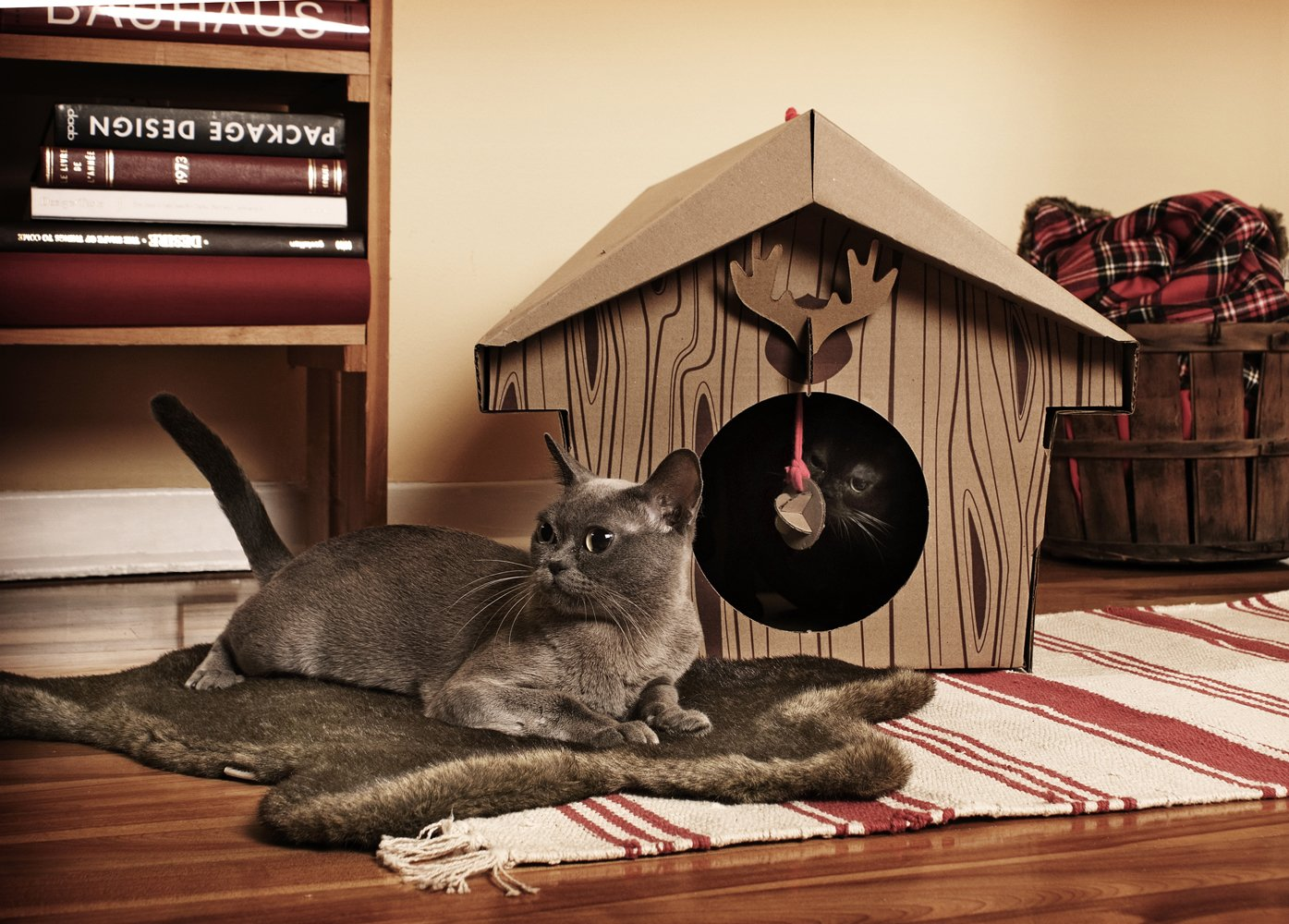 Cardboard House For Cats Amazoncom Loyal Luxe Canadian Cabin For Fluffy Little Critters