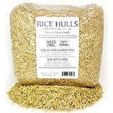 Amazon.com : Rice Plant 200 Plus Seeds Organic : Vegetable