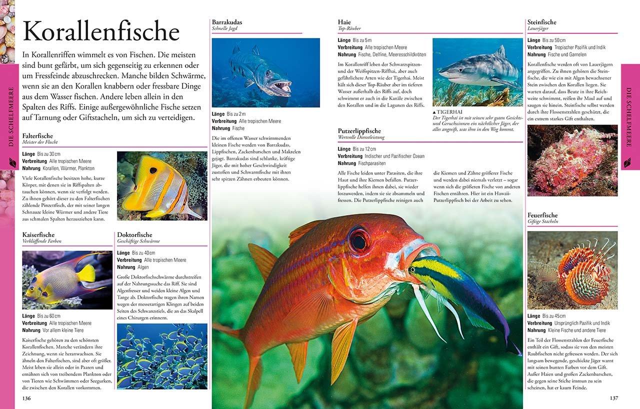 Ozeane für clevere Kids: 9783831032099: Amazon.com: Books
