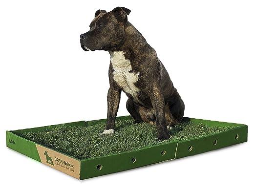 8 opinioni per GreenInBox XL- Lettiera in vera erba