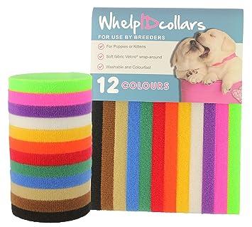 Collares de identificación para cachorros, cierre de velcro auténtico, de WhelpIDcollars: Amazon.es: Productos para mascotas