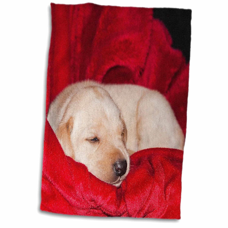 3dRose A Black Labrador Retriever Puppy dog-NA02 ZMU0153-Zandria Muench Beraldo Towel 15 x 22