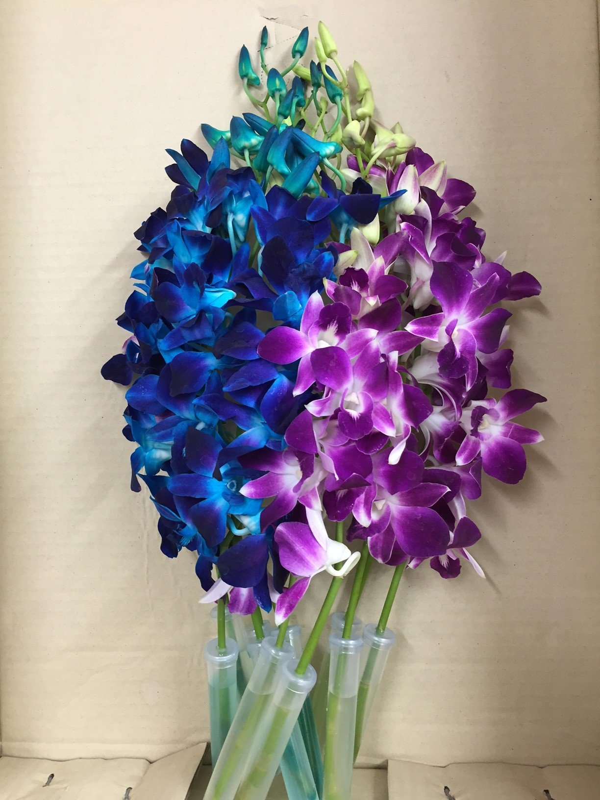 Blue Dyed Dendrobium Orchid with Purple Dendrobium Orchid by eflowerwholesale