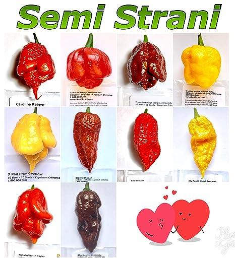 5 graines Chili Peter Pepper yellow piment