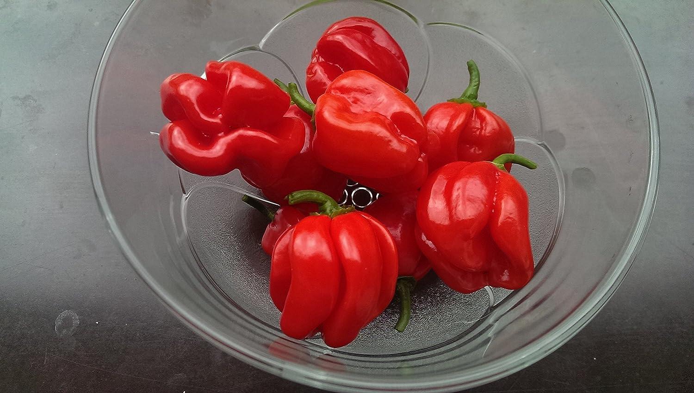 Asklepios-seeds® - 15 Semillas de Chili Habanero red chile habanero