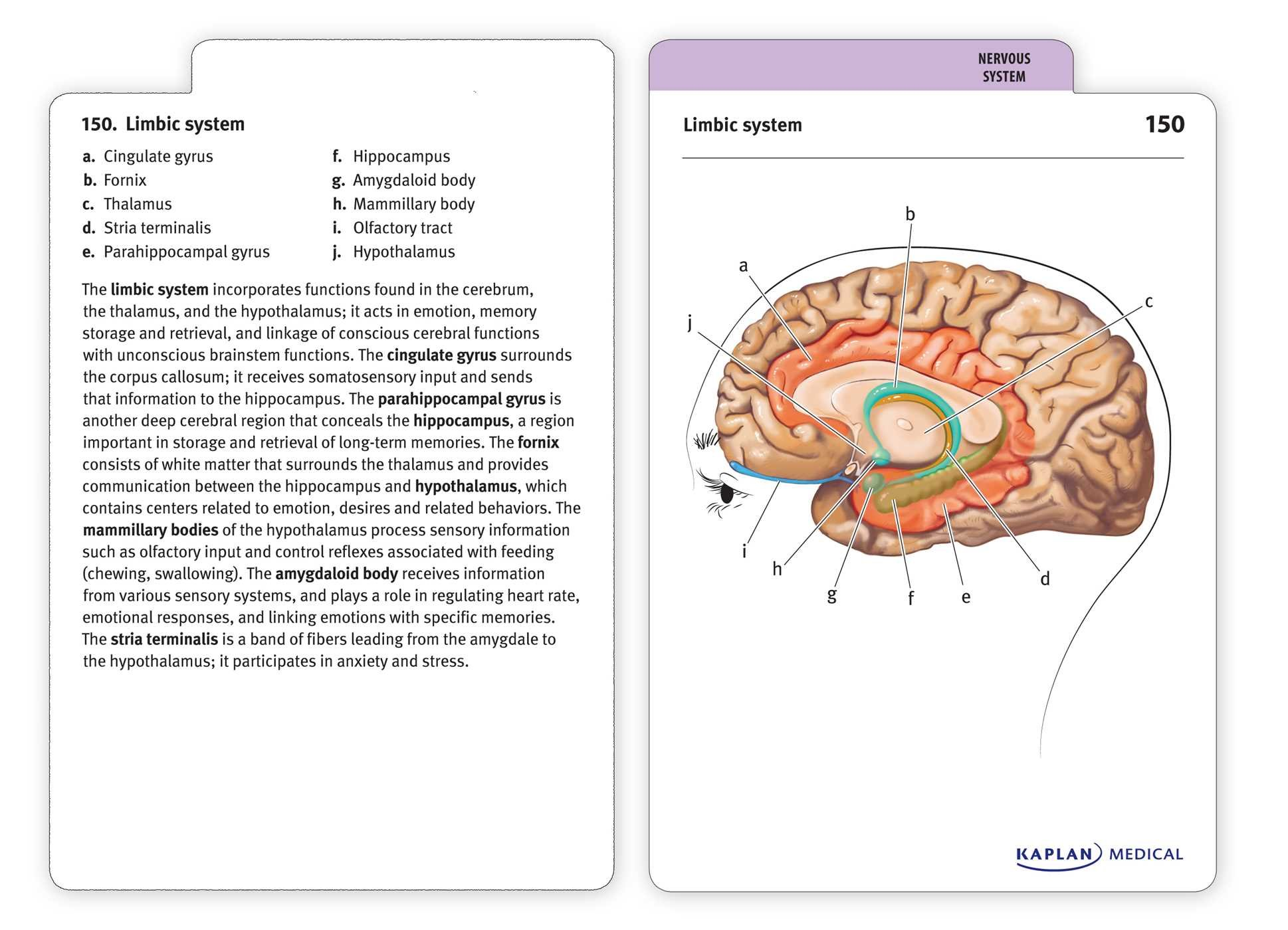 Anatomy Flashcards: Amazon.de: Joanne Tillotson, Stephanie McCann ...