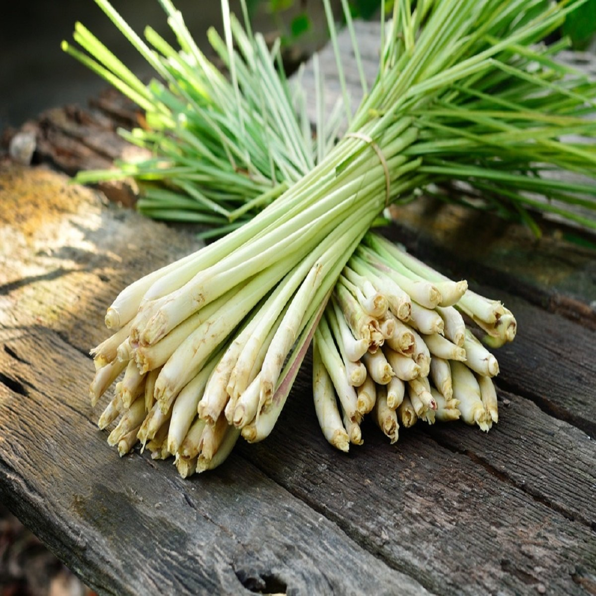 LEMONGRASS FRAGRANCE OIL - 16 OZ/1 LB - FOR CANDLE & SOAP MAKING BY VIRGINIA CANDLE SUPPLY - FREE S&H IN USA