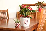 Costa Farms Live Red Anthurium, 12-Inches