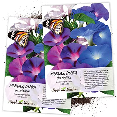Seed Needs, Tall Mix Morning Glory (Ipomoea purpurea) Twin Pack of 100 Seeds Each Untreated : Garden & Outdoor