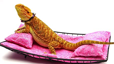 Review Chaise Lounge for Bearded Dragons, Pink Batik fabric