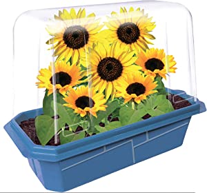 Grow Your Own Sunflower Kit - Start Sprouting These Happy and Cheerful Flowers - Includes Everything Needed for The Plants to Blossom