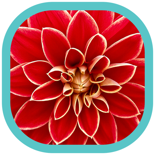 Flores Hd Wallpapers Amazon Es Appstore Para Android