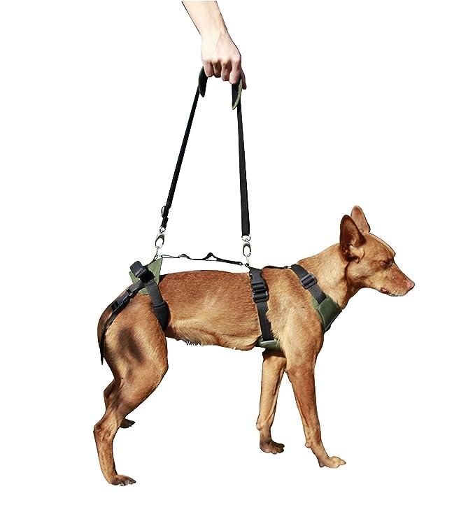 Arnés canino Integral - M: Amazon.es: Productos para mascotas