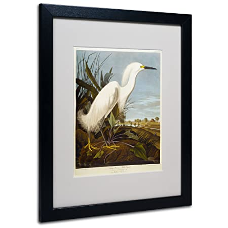 Snowy Heron Matted Artwork by John James Audubon with Black Frame, 16 by 20-Inch